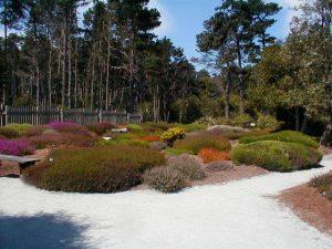 brezo_jardin