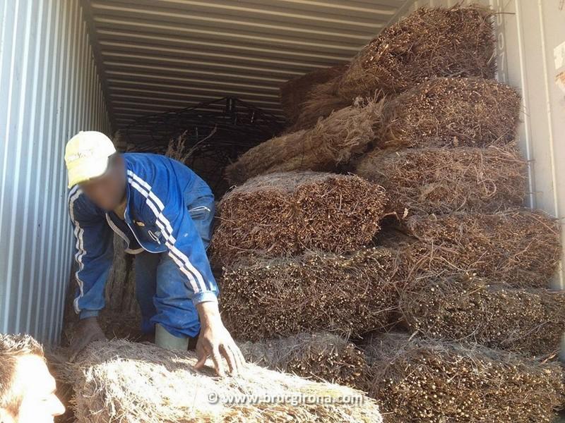 Proceso de carga de parasoles Bruc Girona para la exportación