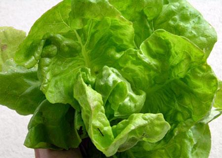 lechuga-alimento-lleno-beneficios