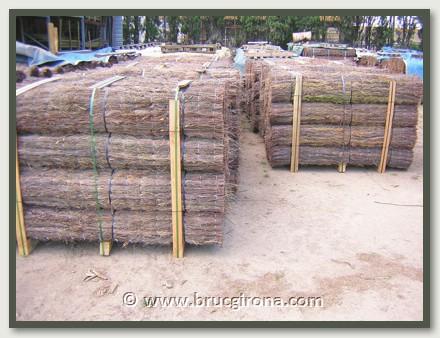 Cuidada producción de brezo Girona en nuestra planta de fabricación